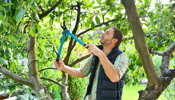 Mann, der Baum schneidet