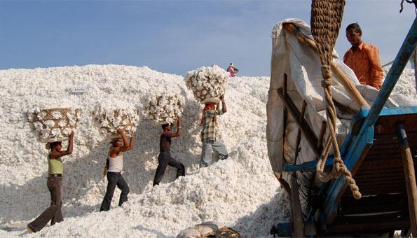Bio-Baumwolle: Fakten und Infos