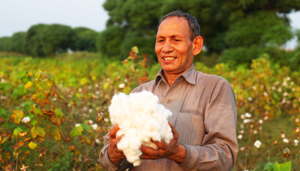 Bio-Baumwolle kommt ohne Pestizide und viel Dünger aus.