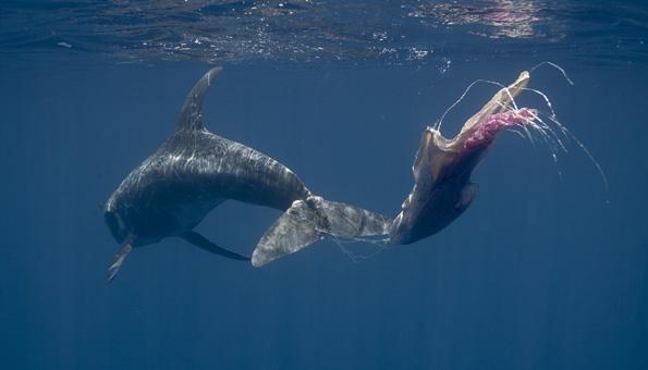 Jährlich landet tonnenweise Plastikmüll im Meer, worunter Meerestiere leiden