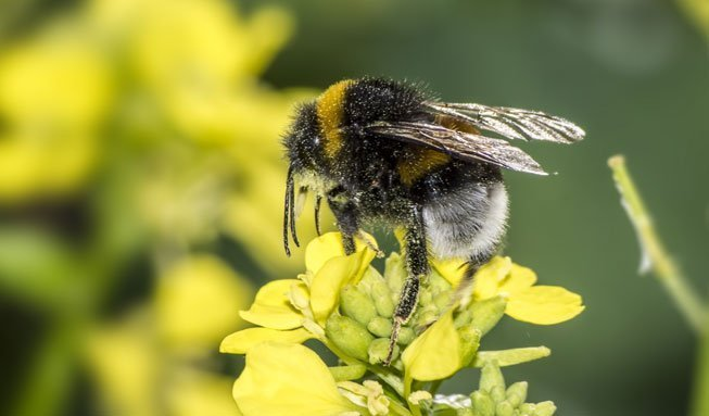 Massives Insektensterben: Bereits 75 Prozent verschwunden