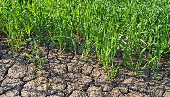Der Klimawandel verstärkt die Trockenheit in der Schweiz