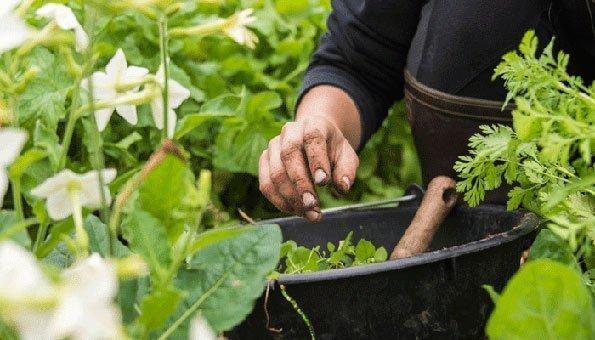 Der Anbau unserer Lebensmittel wird sich durch den Klimawandel verändern.