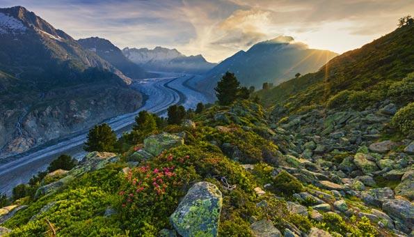 Naturschutzgebiete Schweiz: Der Aletschwald ist ein atemberaubendes Naturschutzgebiet im Wallis.