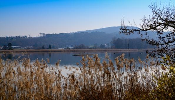 Naturschutzgebiete Schweiz: Am Klingnauer Stausee geniessen insbesondere Vögel einen besonderen Schutz