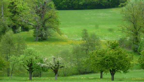 Naturschutzgebiete Schweiz: Spazieren Sie durch den alten Eichenhain im Naturschutzgebiet Wildenstein