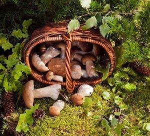 pilze bestimmen nicht nur im zweifel die pilzkontrollstelle fragen. Black Bedroom Furniture Sets. Home Design Ideas
