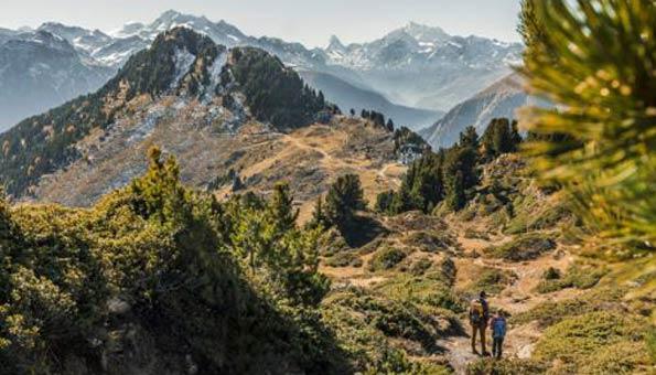 Naturschutzgebiete Schweiz: der eindrückliche Aletschwald