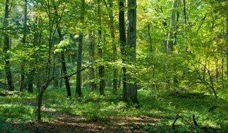 Der älteste Urwald in Europa muss stehen bleiben
