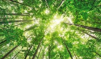 Warum Waldbaden gerade zum Trend wird