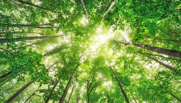 Waldbaden: Zum Stressabbau in die Natur eintauchen