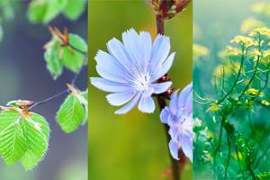 Mit diesen Apps Pflanzen bestimmen und Blumen entdecken