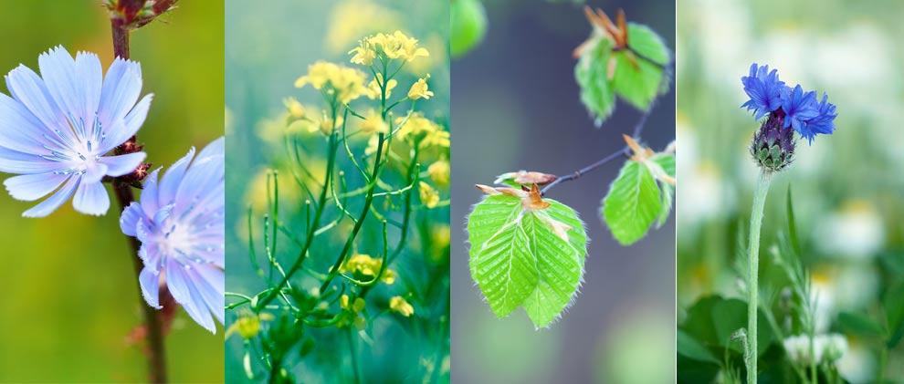 App zum Pflanzen und Blumen bestimmen!