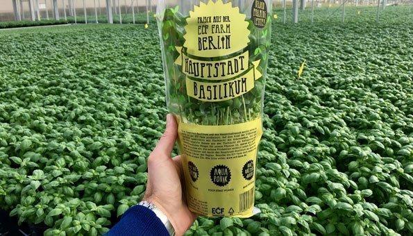 Aquaponik ist in: Berlin züchtet Basilikum und Barsche mit gleichem Wasser