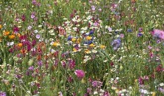 Artenreiche Landschaften passen sich besser an Klimawandel an