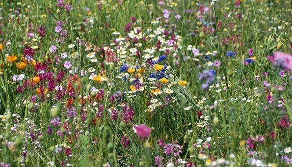 Ökosysteme funktionieren besser, wenn sie mehr Artenvielfalt haben