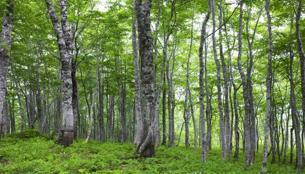 b ume gibt es achtmal mehr als gedacht aber abholzung bedroht sie. Black Bedroom Furniture Sets. Home Design Ideas