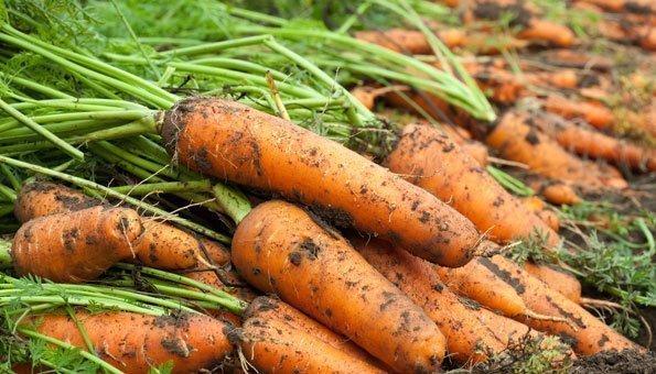 Weniger Gesetze sollen Food Waste verringern