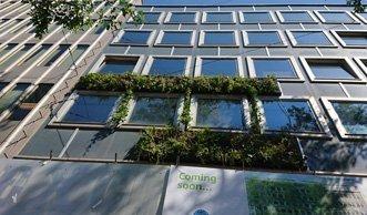 In Zürich entsteht die erste bepflanzte Hausfassade in einer Schweizer Innenstadt