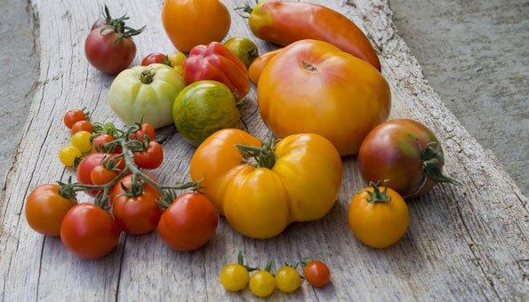 stadt tomaten selber pflanzen jetzt kostenlos samen bestellen. Black Bedroom Furniture Sets. Home Design Ideas