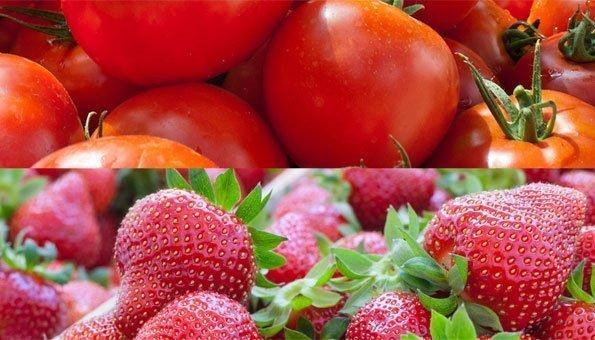 Die Saison für Tomaten und Erdbeeren hat begonnen
