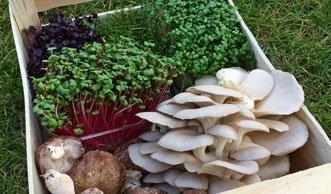 In Paris wachsen Gemüse und Pilze jetzt unter der Erde