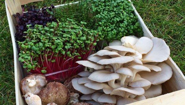 Urban Farming: In Paris wachsen Gemüse und Pilze unter der Erde