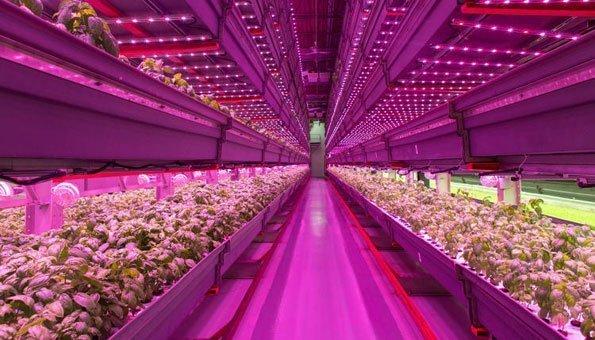Salate und Kräuter werden über LED beleuchtet, um auch unter der Erde zu wachsen.