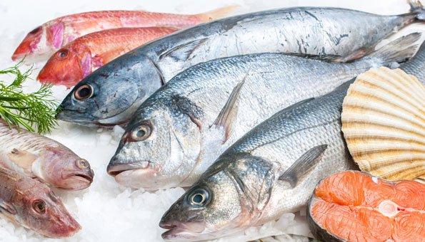 Schweizer detailh ndler setzen auf nachhaltigen fisch for Fisch bilder