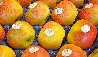 Im Einkaufskorb der Schweizer liegen immer öfter Bio-Produkte