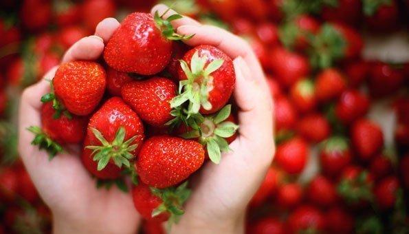 Endlich gibt es wieder Erdbeeren von Schweizer Feldern
