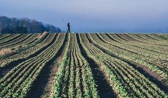 Wie die digitale Welt unsere Ernährung beeinflusst