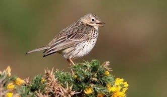 Ausgezwitschert: Ein Drittel weniger Vögel in 15 Jahren