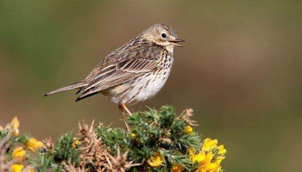Das Zwitschern verstummt: Ein Drittel weniger Vögel in 15 Jahren