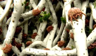 Milben bekämpfen: Diese 8 Hausmittel und Massnahmen helfen wirklich