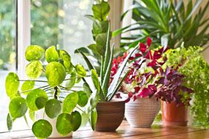 18 Tipps für gebrauchte Teebeutel. Pflanzen düngen.