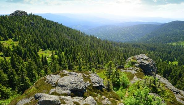 Bayrischer Wald grosser Arber