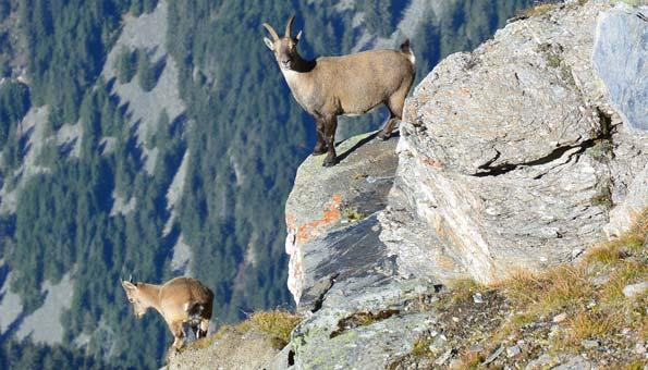 Naturpark Beverin: Die 7 besten Wander- und Ausflugstipps