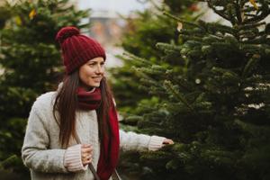 Weihnachtsbaum mieten im Topf oder kaufen: auf dem Markt