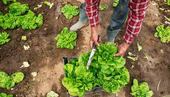 Bio-Lebensmittel im Check