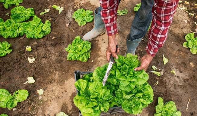 Lebensmittel im Check – so viel nützt Bio wirklich