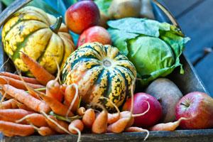 Weche Frucht- und Gemüsesorten jetzt Saison haben