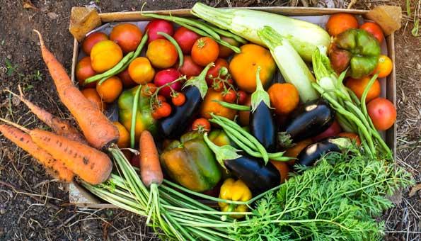 Food Waste bekämpfen mit einem Gemüse-Abo von «Grassrooted»