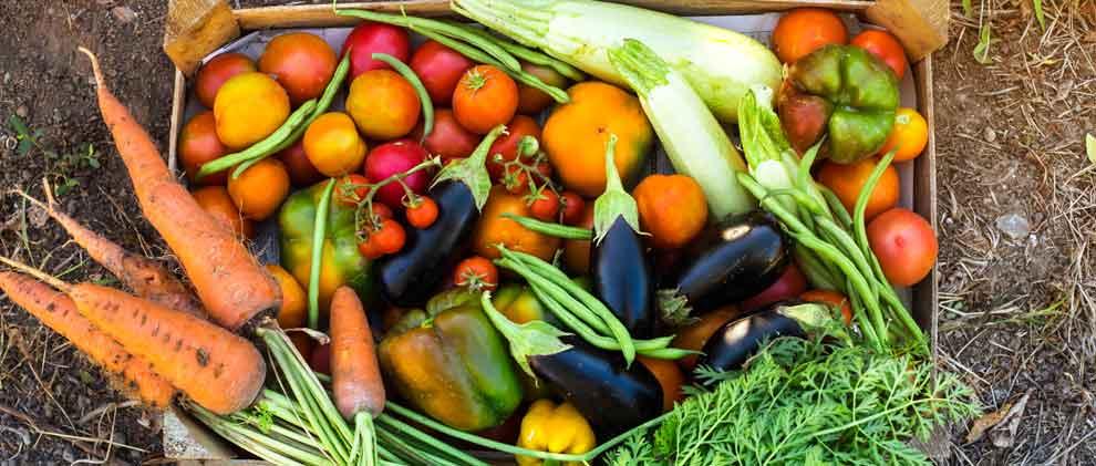Verein «Grassrooted» lanciert Gemüse-Abo gegen Food Waste