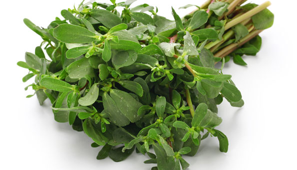 Sommerportulak für Salat im eigenen garten anbauen.