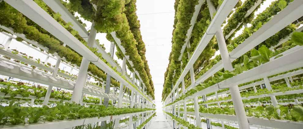 Wie Urbane Farmen Millionen Menschen ernähren sollen