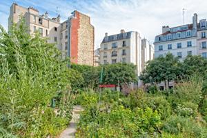 Urbane Gärten verbessern das Stadtklima und erhöhen die Artenvielfalt