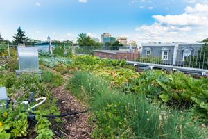 Urban Farming im kleinen Stil auf dem Dach mitten in der Stadt